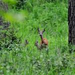Na terenach Regionalnej Dyrekcji Lasów Państwowych w Olsztynie ruszyło wielkie sadzenie drzew.  Tej wiosny leśnicy posadzą nowe lasy na powierzchni prawie 4 tysięcy hektarów