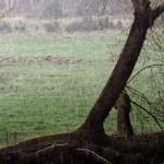 Leśnicy alarmują, że takiej ilości wody w lasach Warmii i Mazur nie było od lat