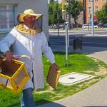 Radio Olsztyn ratuje pszczoły i przechodniów – FILM