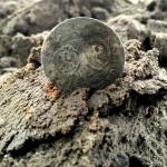 W okolicach Iławy odkryto kolejny skarb