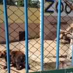 Braniewo – najmniejsze zoo?