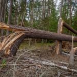 Niebezpiecznie w lasach w okolicach Giżycka