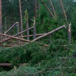 15 lat temu nad Puszczą Piską przeszedł huragan. Odnowienie zniszczonego lasu zajęło osiem lat
