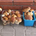 Wysyp grzybów w warmińsko-mazurskich lasach