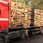 Transport drewna pod lupą kontrolerów. Sprawdzano przede wszystkim legalność pozyskania surowca