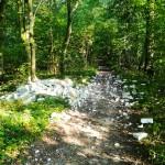 W czynie społecznym uprzątnęli zabytkowy park w Szymbarku