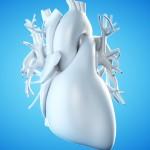 Programista z Elbląga stworzył model 3D chorego serca swojego synka