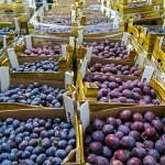 Nadmiar jabłek, śliwek czy marchwi oddaj do Banku Żywności