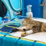 Sterylizacja sposobem na walkę z bezdomnością zwierząt