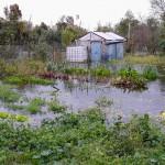 Wysoki stan wody na Żuławach Elbląskich i Zalewie Wiślanym