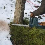Chcesz wyciąć drzewo na działce? Poznaj nowe przepisy