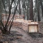 W lesie komunalnym w Elblągu staną odłownie na dziki