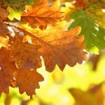 Niebanalna jesień według Edwarda Ratuszyńskiego