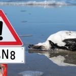 Hodowcy drobiu obawiają się wirusa ptasiej grypy