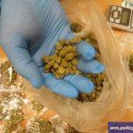 Policjanci zatrzymali w Olsztynie dilera narkotyków. W jego mieszkaniu znaleźli kilogram marihuany i 10 tys. złotych