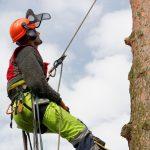 Wycinka drzew w Olsztynie. Kierowcy i piesi muszą być ostrożni