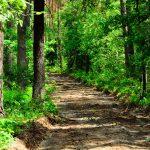 Ciało 60-latki znaleziono w lesie