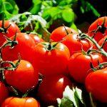 Wsparcie dla lokalnych producentów żywności. Rolnicy mogą starać się o pieniądze na poprawę jakości działania gospodarstwa