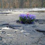 Kwiaty w… dziurach na drodze. Słuchacze PRO wybrali najgorszą drogę