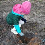 Wystarczą rękawice i szpadel. Wiosenne sadzenie drzew w Nadleśnictwie Elbląg