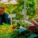 Tysiące drzew, krzewów, kwiatów, ziół i warzyw w jednym miejscu. W Olsztynie odbyły się Wiosenne Targi Ogrodnicze