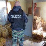 Funkcjonariusze szukali handlarzy sprzedających nielegalne papierosy. Zatrzymali dwóch mężczyzn