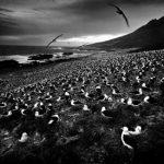 Oko w oko z potęgą i pięknem świata zwierząt – wystawa Tomasza Gudzowatego