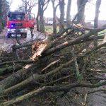 Dwa pożary, podtopienie i kilkanaście powalonych drzew – to bilans burz na Warmii i Mazurach
