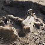 Makabryczne odkrycie w Olsztynie. Robotnicy prowadzący prace budowlane odkryli ludzkie szczątki