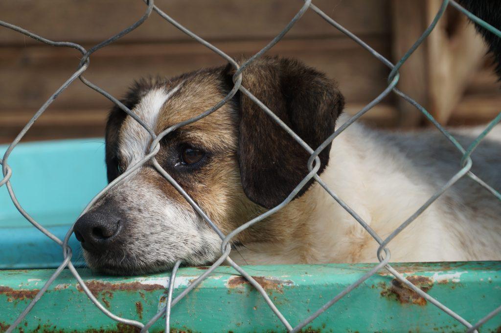 В Ольштыне началась кампания защиты брошенных животных