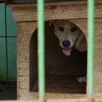 Są skargi na schronisko dla zwierząt prowadzone przez OTOZ Animals. Elbląscy urzędnicy kontrolują placówkę