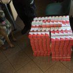 Kierowca rejsowego autobusu chciał przemycić ponad tysiąc paczek papierosów.Tytoń wyczuły służbowe psy