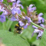 Czy miasto to dobre miejsce dla pszczół?