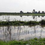 Niewłaściwa gospodarka wodna przyczyną podtopień na Żuławach