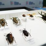 Ma kolekcję liczącą około tysiąca owadów. Z zawodu jest leśnikiem, z zamiłowania entomologiem