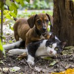 Kilkaset bezdomnych zwierzaków czeka w Elblągu na adopcję lub wirtualnych opiekunów