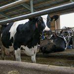 Kupował bydło i nie płacił za nie. 24-latek oszukał rolników na ponad 58 tysięcy złotych