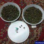 Miał w mieszkaniu prawie kilogram marihuany