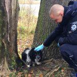 Zmarznięty i wyczerpany pies dzięki policjantom trafił do schroniska