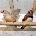 Hodowca ptaków egzotycznych ze Spręcowa koło Olsztyna ornitologicznym mistrzem Polski