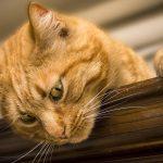 Olsztyn naprawdę kocha koty. W mieście otwarto drugą kocią kawiarnię
