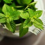 Rośliny i zioła o leczniczej mocy