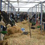 Tłumy podczas targów rolniczych Mazurskie Agro Show w Ostródzie