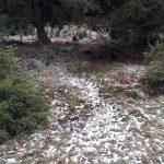 Poszukiwany 56-latek z Elbląga nie żyje. Ciało znaleziono w lesie