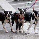 Jak spacerować z psem. O tym w Bliższych spotkaniach