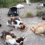 Bezdomność kotów