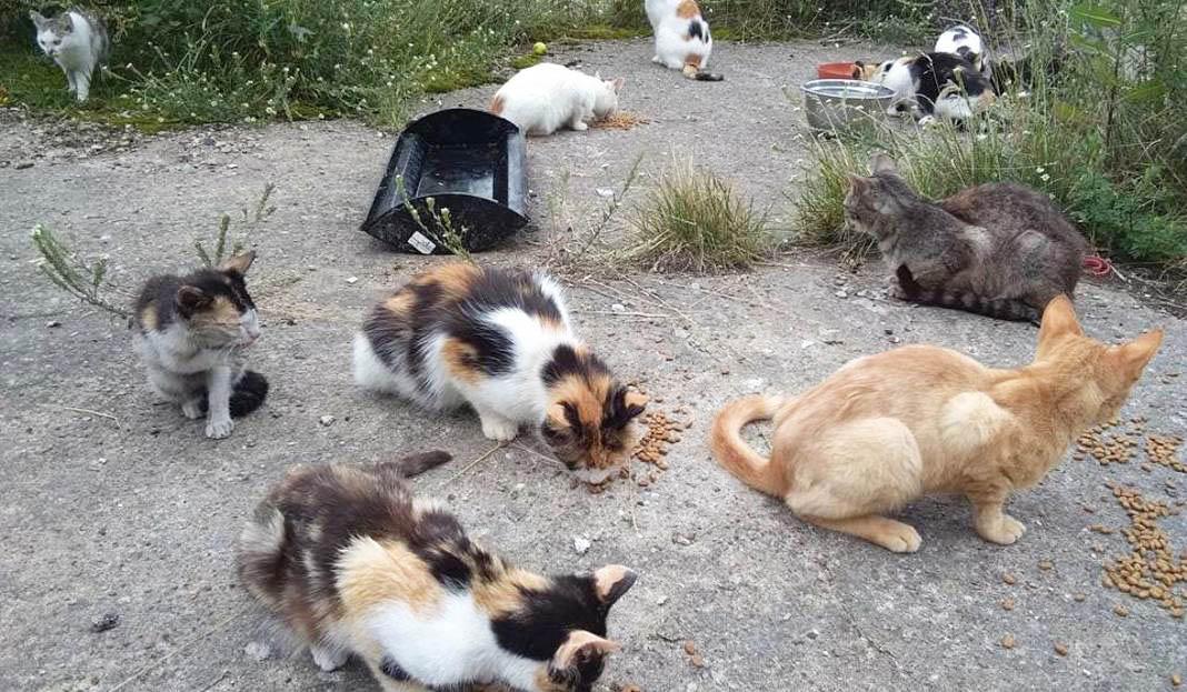В Ольштыне живут несколько тысяч бездомных кошек. Приют выдает корм всем желающим их накормить