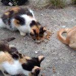 W Olsztynie żyje kilka tysięcy bezpańskich kotów. Schronisko wydaje karmę  opiekunom