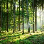 Po raz 6. obchodzimy Międzynarodowy Dzień Lasów