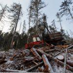 Tragedia podczas wycinki drzew. Pracownik zginął pod kołami ciągnika